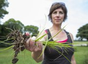 Laurie Comstock holds a handful of yellow nutsedge that she pulled from her garden in southern Douglas County on Aug. 23.
