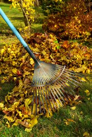 Mow over fallen leaves in the lawn or rake and compost. In the landscape, they can provide insulation but can also form a barrier for air and water movement if the layer is too thick.