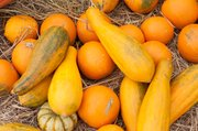 Ornamental (cucurbita) gourds