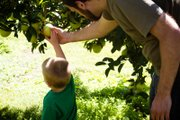 The Kid and Sweet Husband picking apples at the Vertacnik Orchard.