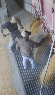 Matt Wyckoff, bottom, runs his hand through a stream of soybeans pouring from his truck into the elevator at Baldwin Feed Co. in Baldwin City on Monday. Wycoff was delivering the harvested beans from the Wintermantel Farms near Baldwin City. Baldwin Feed employee Pete, top, was helping unload. Elevator crews were busy with a steady flow of farmers bringing in corn and beans from weekend and Monday harvesting.
