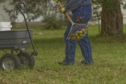 Peggy Mersmann-Laptad uses a wire roller to pick up walnuts at her farm north of Lawrence.