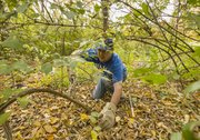 Eric Akers, of Lawrence, works on clearing honeysuckle trees at Hidden Valley Camp, 3420 Bob Billings Parkway, Sunday afternoon. The honeysuckle was being removed so that other species of trees are able to grow.