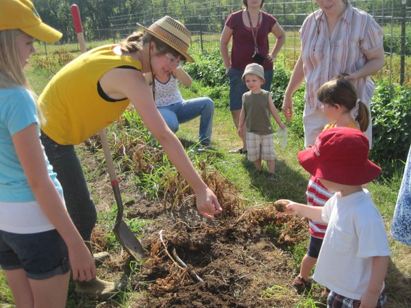 Digging potatoes at Maggie's Farm