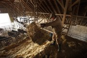 Stockman Jim Neis tosses a bale of hay from the loft of his cattle barn during morning rounds on Thursday, Feb. 13, 2014, south of Eudora. Winters can be particularly challenging times for stockmen like Neis, who raises more than 300 head of cattle with other members of his family.