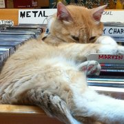 Mickey Roy, one of the Love Garden's cats, hangs out in the metal section at the store.