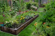 Raised-bed gardens provide a well-defined area where people can't walk.