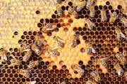 Attracting bees and keeping them around can be beneficial to plants and also to your home by providing honey and wax.