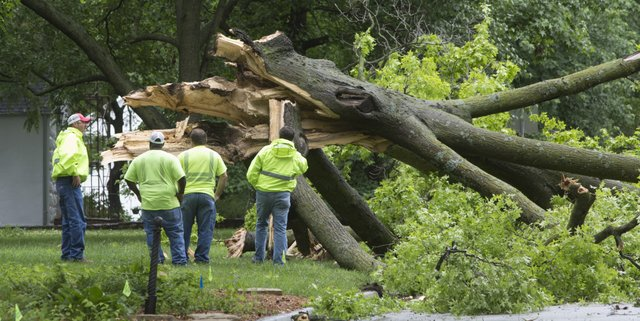 Mike Perkins, left, street division manager, and other street crew employees survey a fallen oak tree at 2200 Vermont after heavy winds blew through Lawrence Thursday morning.