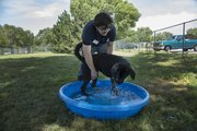 Ethan Hrabe, who works at the Lawrence Humane Society, 1805 E. 19th St., helps Nacho cool off in a kiddie pool as temperatures spike in the high 90s Thursday afternoon.