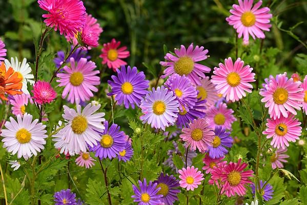 Garden Variety Rejuvenating Overgrown Perennials