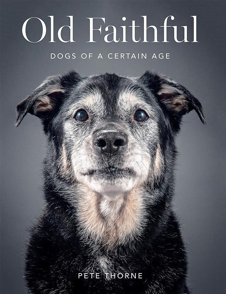dogs are faithful and they do A faithful dog a faithful dog will play what dogs do for when you buy pet insurance you are being just as faithful to your dog as they have been to you.