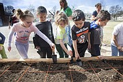 Cordley Elementary School kindergarten students plant seeds after ground is broken on a school garden, Friday, March 11, 2016.
