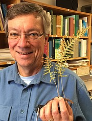 Chris Haufler is a professor of ecology and evolutionary biology at the University of Kansas. He researches plant biology, including the genetics of ferns.