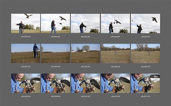 A digital contact sheet of falconer Jack Stoddart by Richard Gwin.
