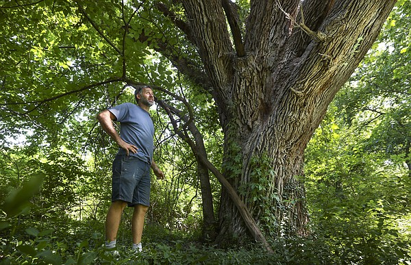 Matt Jones, a founding partner of Struct/Restruct, looks out from the base of a bur oak tree near the eastern edge of a plot of land in East Lawrence at 12th Street and Haskell Avenue. Struct/Restruct, which owns the land, planned to sell the lot that contains the tree to the city of Lawrence for $58,000. The tree is believed to be one of the largest in the state.