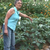 Bio-intensive gardening